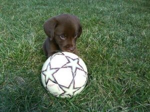 playtime for puppy