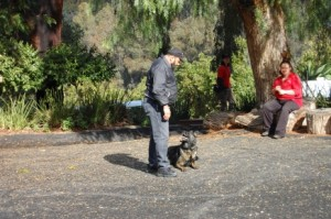 Service Dog Training California