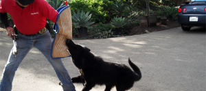 Dog Training Temecula CA Private Dog Trainers