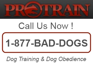 Private Dog Trainers San Clemente CA