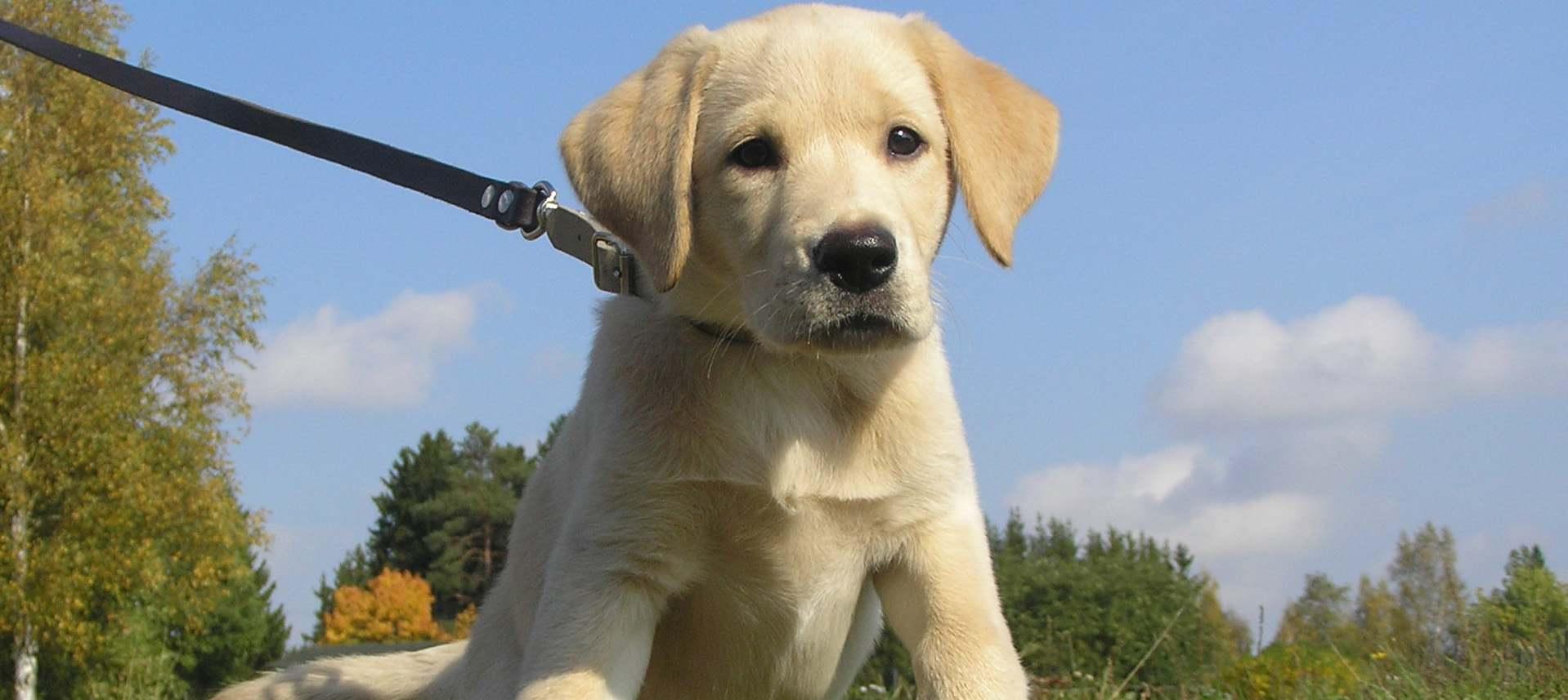 The Dog Blog: DogMan Mark Wisdom