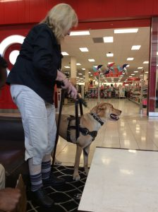service dog training, disabled persons