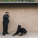 Dog Training Poway