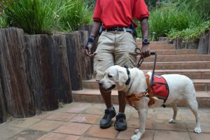 Service Dog Training La Jolla CA